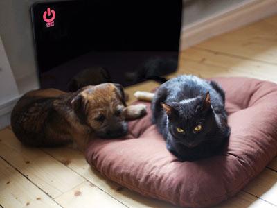 Comfy Pet Warmer